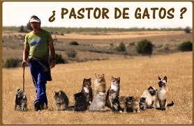 el manager como pastor de gatos